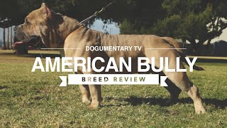 AMERICAN BULLY BREED REVIEW