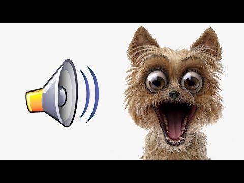 Вопрос: Какие звуки раздражают собак?