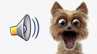 👍СОБАКА ПОЛЮБИТ ЭТИ ЗВУКИ ПРИКОЛ НАД СОБАКОЙ YOUR DOG LOVES THESE SOUNDS