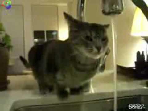 stupid cat try to drink water from the tap!