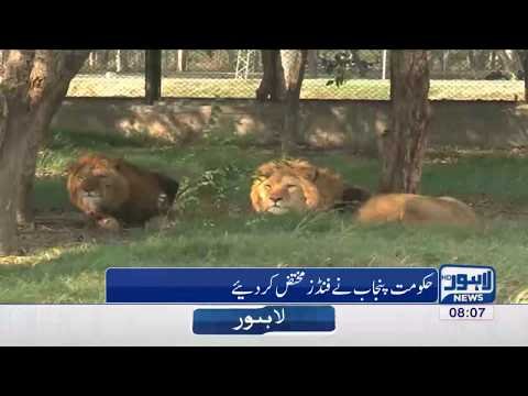 Safari Park to be built in Jallo: Funds allotted