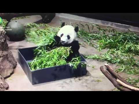 Smithsonian National Zoo - One Bei Bei in a box to go please.