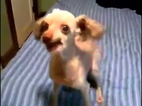 Most Funny Video - World's Funniest Dog ever - YouTube