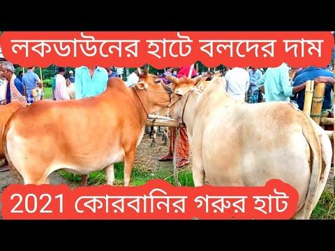 আমরাইদ গরুর হাটে বলদ গরুর দাম/2021 korbanir cow market/bull price 2021/amraid,kapashia,gazipur/