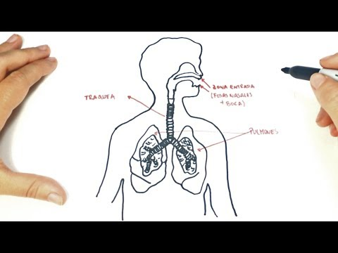Cómo dibujar el Sistema Respiratorio paso a paso | Dibujo fácil del Sistema Respiratorio