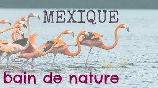 Voyage Yucatan, Mexique