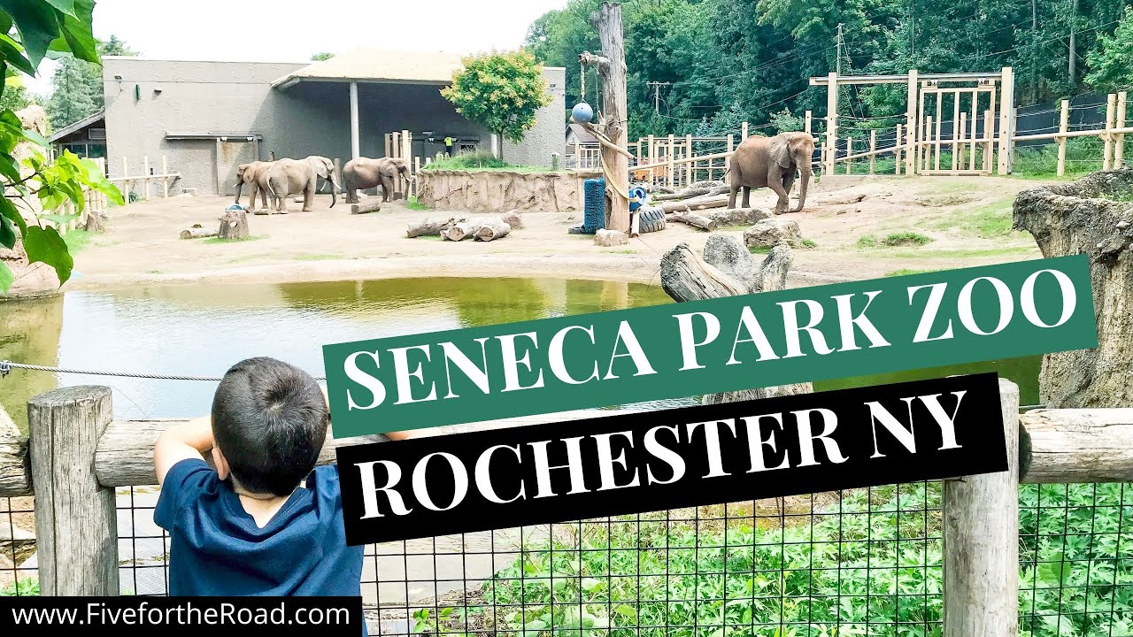 Seneca Park Zoo capacity will be increased to 50% on April 26th