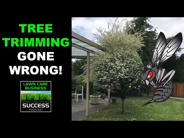 Tree Trimming Gone Wrong! Attacked by Bald Faced Hornets | How To Trim A Dappled Willow Tree