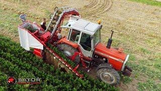 Sator Compakt - Kombajn do selera / Celery Harvester