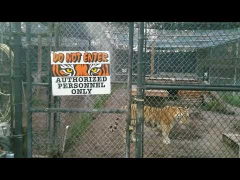 The Catty Shack Wildlife Sanctuary Tour in Jacksonville, Florida 2017
