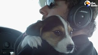 Pilots Help Dogs Find Forever Homes  | The Dodo