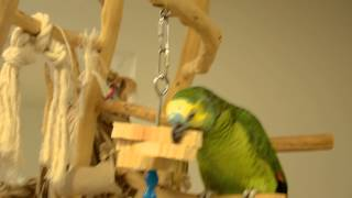 "DSC 3782 BFA and foraging toy with 1 1/2"" strips of wood on SS skewer Thumbnail"