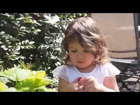 เก็บราสเบอร์รี่ที่สวนหลังบ้าน