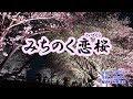 『みちのく恋桜』津吹みゆ カラオケ 2019年6月5日発売