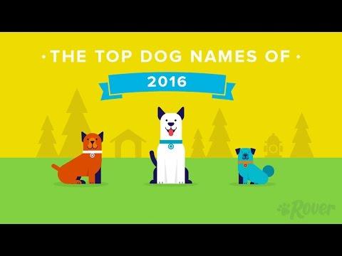 Rover.com Presents the Top Dog Names of 2016