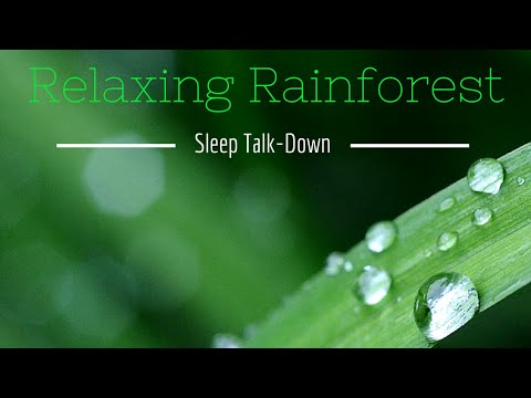 Guided SLEEP Meditation | Rainforest SLEEP Talk-Down | Heal Insomnia