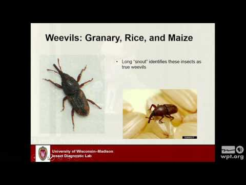 WPT University Place: Managing Stored Grains Insects