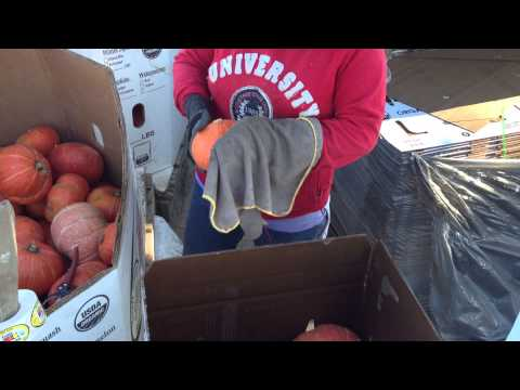 Tutti Frutti Farm workers clean and pack organic squash