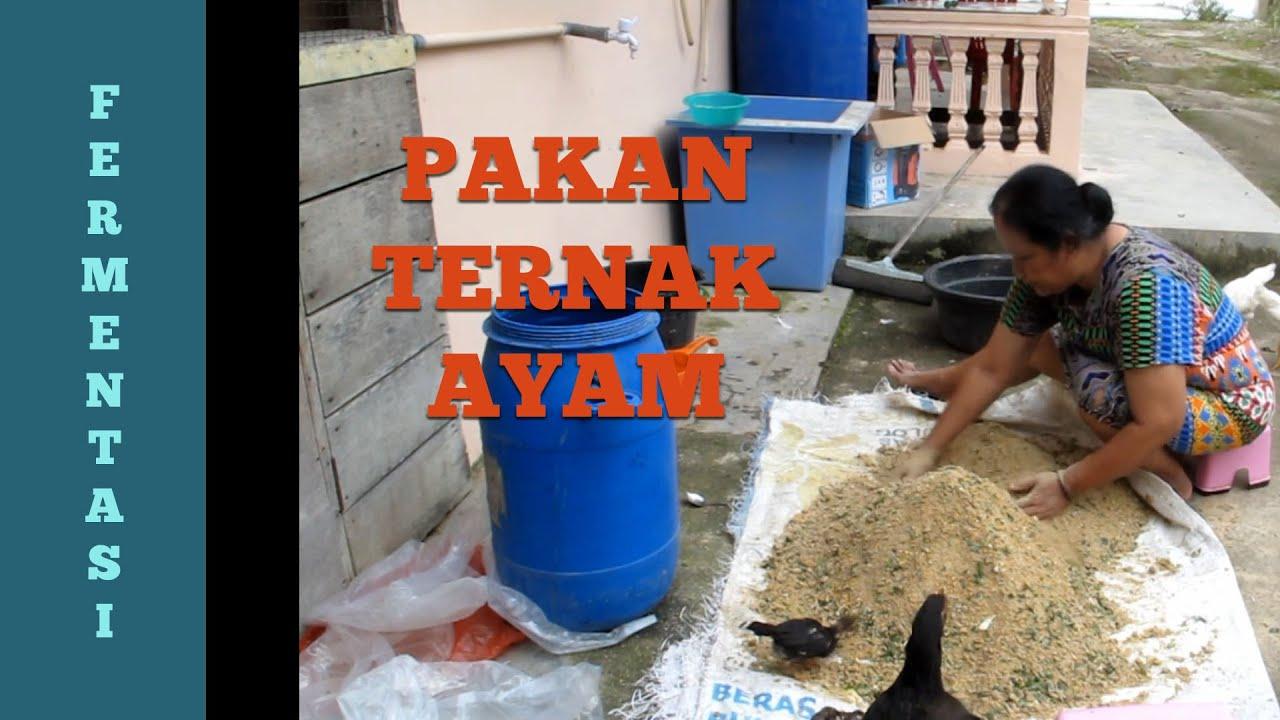 Fermentasi Pakan Ternak Ayam - YouTube