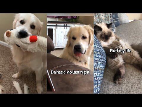 Funny Animal Compilation