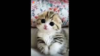 Как я люблю милых котят и щенят!Муси пуси какой котёнок!!!❤❤❤❤❤