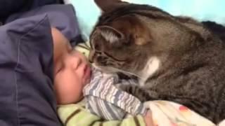 Кот спит возле маленького ребенка
