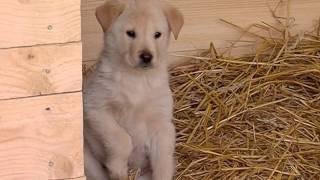 В Ярославле продолжается строительство приюта для временного содержания собак
