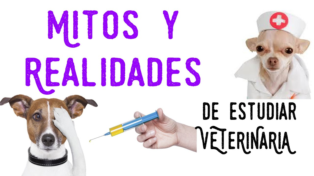 Mitos y realidades estudiar veterinaria - YouTube