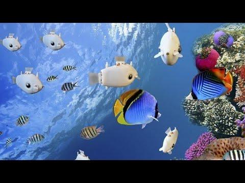 قنديل بحر روبوت لإنقاذ الشعاب المرجانية  - نشر قبل 7 ساعة