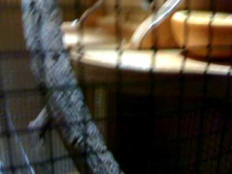 Hilo Musical en la jaula de