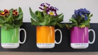 DIY planter ideas - Awesome & easy!