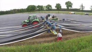 Cosechadora de esparragos Strauss modelo tirado por tractor