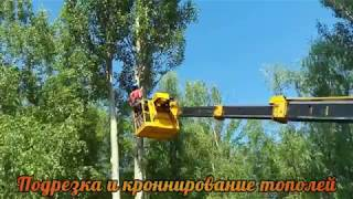 видео Кронирование тополей