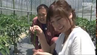 2017年6月放送 「伏見とうがらし 堤さん(南丹市)」 さまざまなブランド...