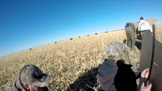 Snow Goose Hunting/ Jumping (4Days)- The Fowl Brothers (2015)