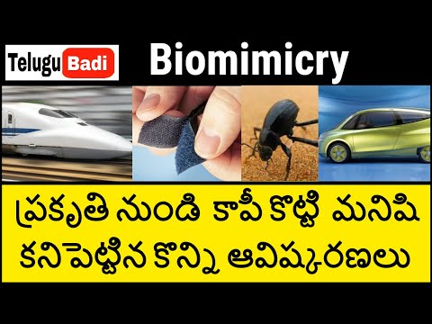 Top 15 Nature-inspired Discoveries And Inventions In Telugu | Biomimicry In Telugu | Telugu Badi