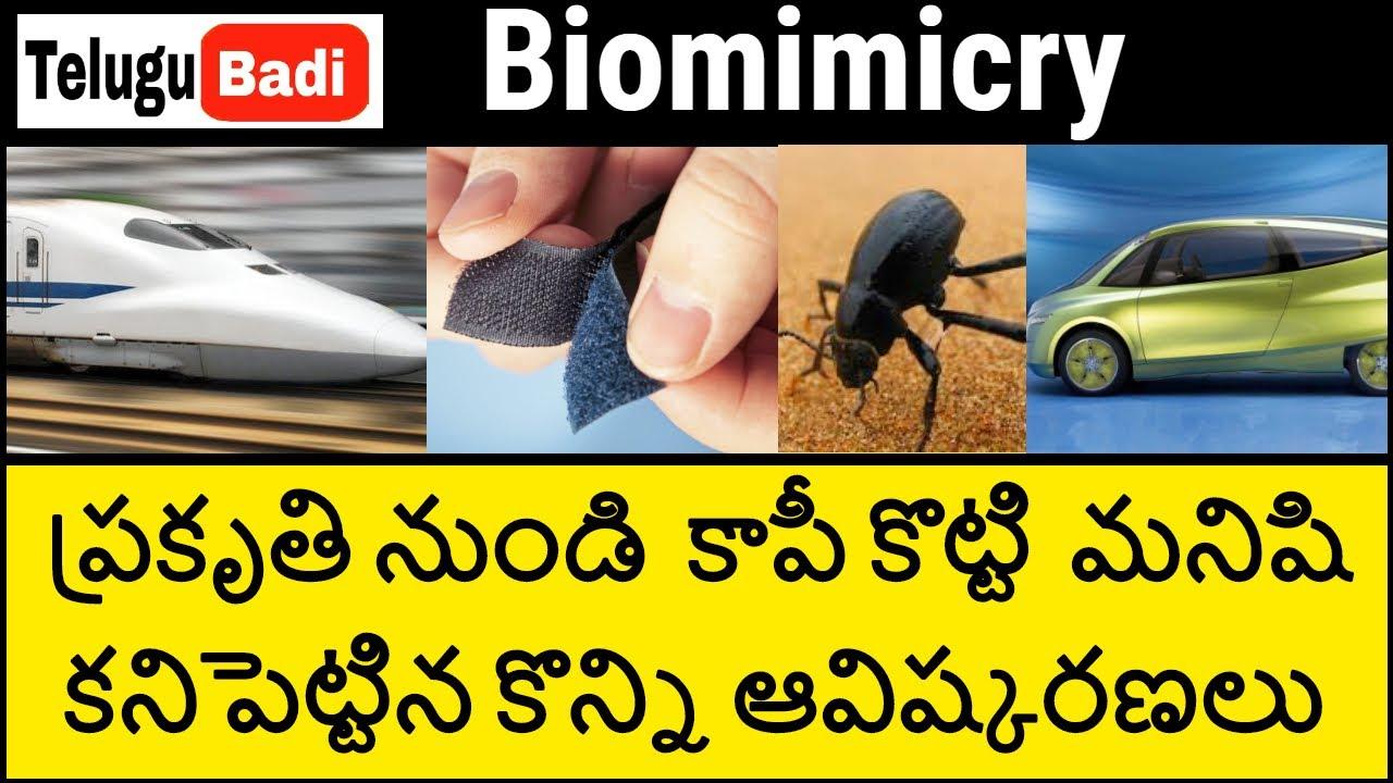 Top 15 Nature-inspired discoveries and inventions in Telugu   Biomimicry in Telugu   Telugu Badi