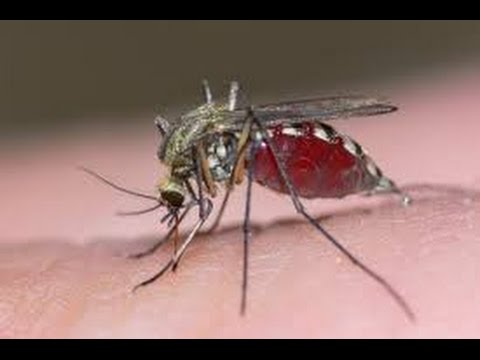 Prevent Mosquito Infestation in your Yard NJ 732-640-5488 | Zika Virus New Jersey