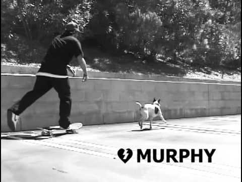 Dan Murphy Zero