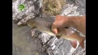 Рыбалка. Ловля ленка руками.