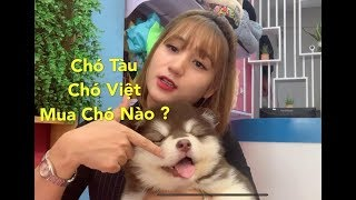 Mua Chó Tàu Hąy Chó Việt? 1000 Câu Hỏi Khi Nuôi Chó #1 Mật Pet Family