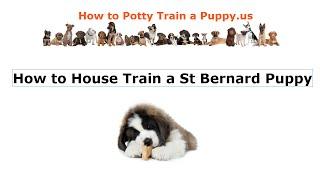 How to House Train a St Bernard Puppy