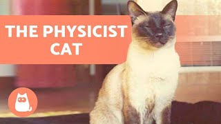 The CAT That WROTE a PHYSICS PAPER 📝🐱 (F. D. C. Willard aka Chester)