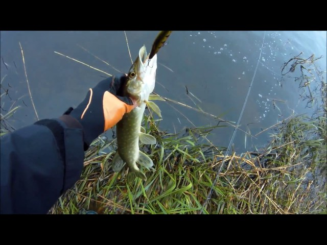 Весенняя рыбалка на щуку в омске