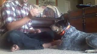 The Art Of Marker Training Your  Dog