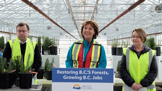 $150-million reforestation investment will help fight climate change, create more rural jobs