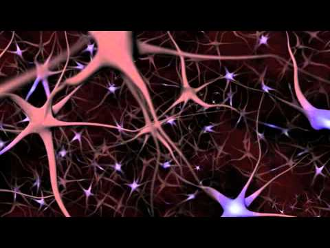 Neurons and What They Do ~ An Animated Guide