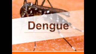Dengue -  Dr. Sylvio Sergio Neves Provenzano