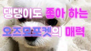 Ep.05 강아지 댕댕이도 좋아 하는 오즈모포켓의 매력…