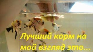 Чем я кормлю рыбу! Кормление аквариумных рыб!